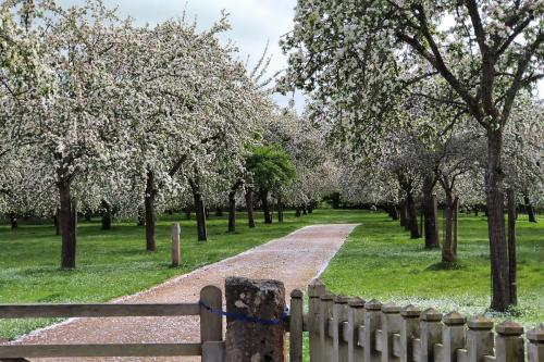 Orchard In East Harptree